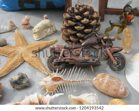 seashells and starfish #1204193542