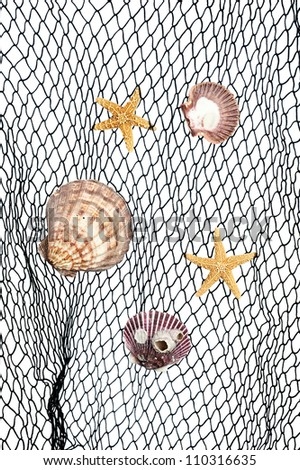 Seashells and starfish caught in a green fishing net for use as an aquatic inference or decorative background.