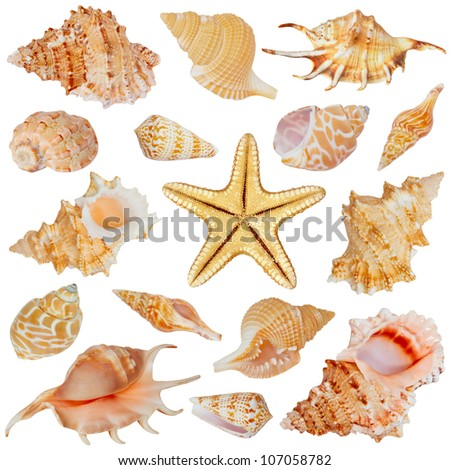 Seashells and starfish collection isolated on white background
