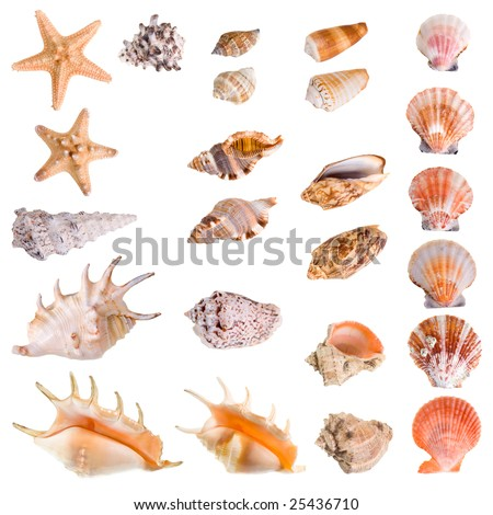 Seashells and starfish collection isolated on white background. Each element has a 8 Mp resolution