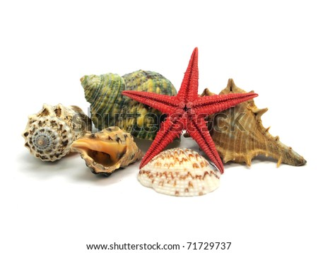 seashells and starfish on a white background