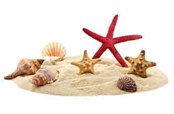 Seashells and starfish on pile of sand isolated on white