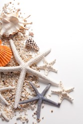 Seashells and starfish over white. Vacation concept .