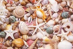 Seashells background, lots of amazing seashells and starfishes mixed