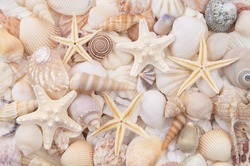 Seashells background, lots of amazing seashells, coral and starfishes