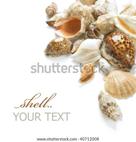 Seashells Border