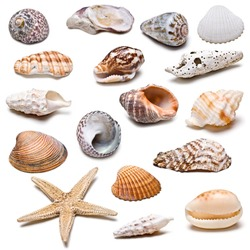 Seashells collection isolated on a white background.
