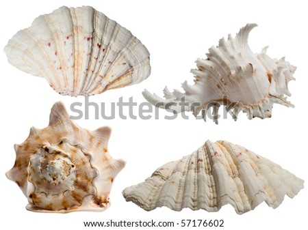 Seashells collection isolated on white