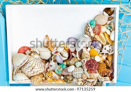 Seashells collection on white frame