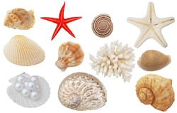 Seashells, coral and starfish isolated on white