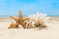 Seashells, coral and starfish on golden sandy beach on a sunny day. Blurred sea water and blur sky in background. Summer vacation and relaxation concept