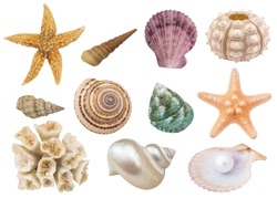 Seashells, coral, starfishes and sea urchin isolated, sea animals collection.