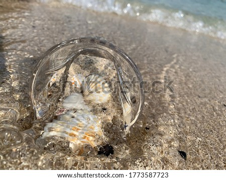 Seashells in a cup on the beach with sand and sea waves in Dubai, kite beach.