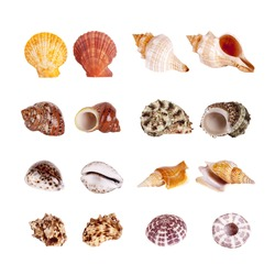 Seashells Isolated With Paths