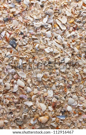 Seashells mixed with beach sand. Perfect as a summer background.