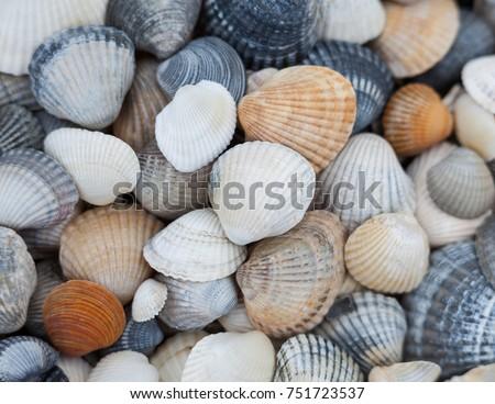 Seashells of different colors. Mollusk shells. Seashell background. Texture of the shells.  Stockfoto ©