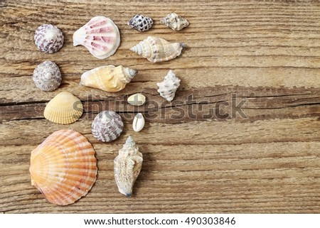 Seashells on a wooden background. Copy space #490303846
