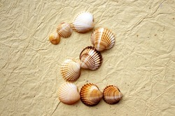 Seashells on beige paper background Number two