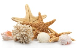 Seashells on sand, isolated on white