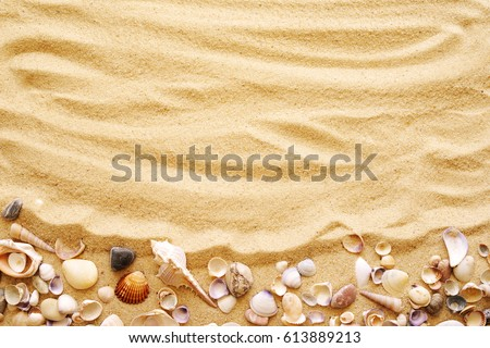 Seashells on sand. Sea summer vacation background with space for the text