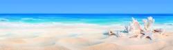 seashells on seashore - beach holiday background