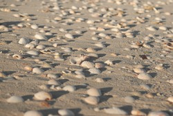 Seashells on the beach and sand