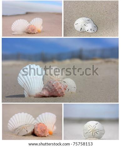 Seashells on the beach collage