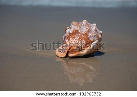Seashells on the beach, Sunshine Coast