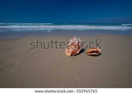 Seashells on the beach, Sunshine Coast