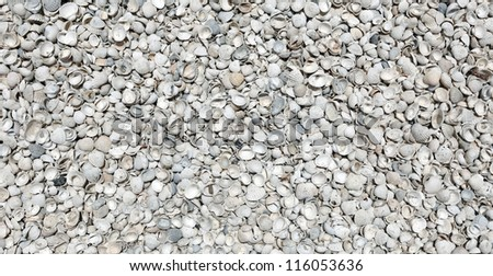 Seashells on the seashore for textural background.