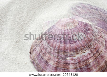 Seashells on white sand.  Macro with shallow dof.  Copy space included.