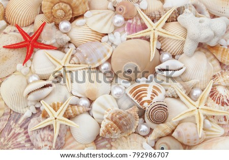 Seashells, pearls and starfishes as background