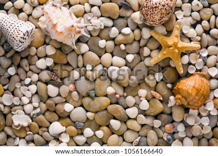 Seashells, starfish and sea pebbles background. Natural seashore stones textured surface, top view