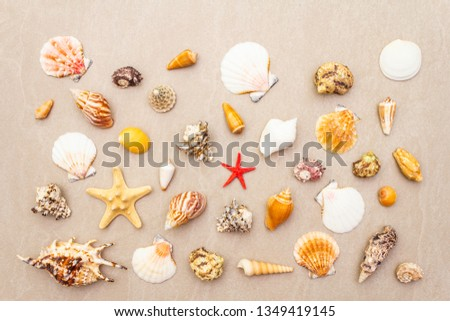 Seashells summer background. Lots of different seashells piled together, top view