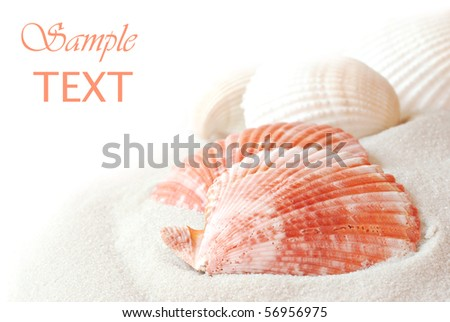 Seashells with sand on white background with copy space.  Macro with shallow dof.