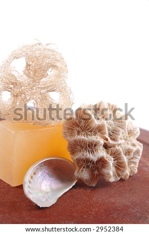 seashells with soap and loofah