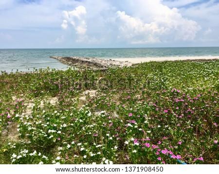 Seashore beach, seashore with flowers #1371908450