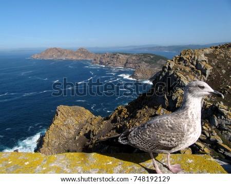 seashore island seagull #748192129