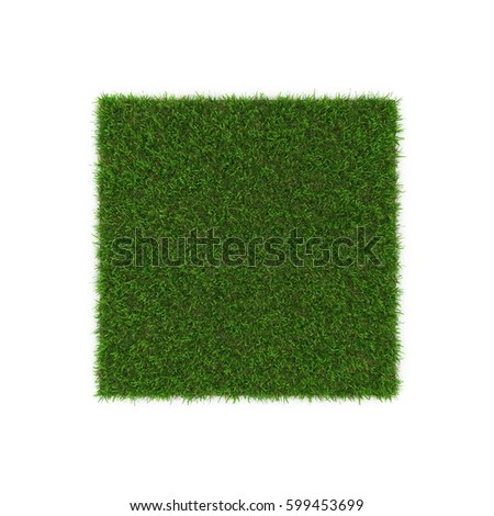 Seashore Paspalum Warm Season Grass on white. 3D illustration