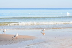 Seashore with soft waves. Seagulls on deserted beach. Selective focus.