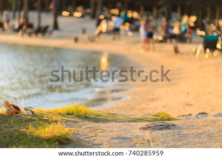 seaside near a resort in a paradise island with people in the background enjoying themself near the ocean. Common whelk in focus and blured background
