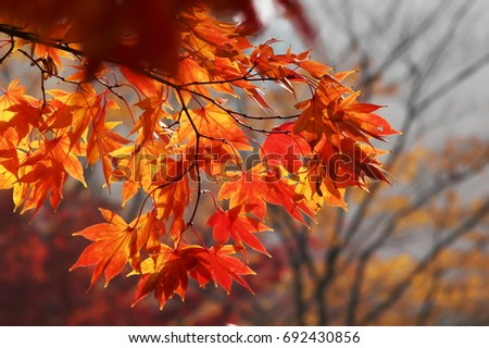 Season of beautiful autumn leaves #692430856