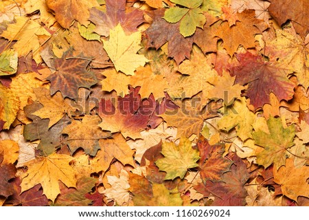 Seasonal autumn background of colorful leaves.