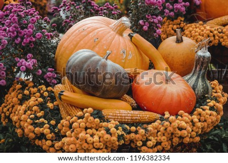 Seasonal autumn display of pumpkins, gourds, corn and squash with flowers #1196382334