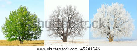 http://image.shutterstock.com/display_pic_with_logo/295900/295900,1264428980,1/stock-photo-seasonal-changes-of-the-same-tree-45241546.jpg