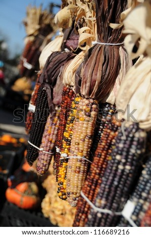 Seasonal Corn for autumn and Thanksgiving