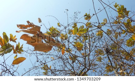 Seasonal deciduous trees #1349703209