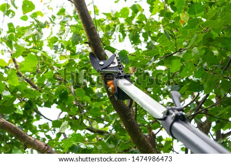 Seasonal pruning trees with pruning shears. Gardener pruning fruit trees with pruning shears. Taking care of garden. Cutting tree branch.