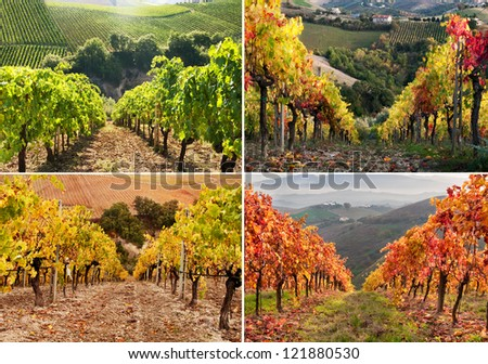 Seasonal vineyard collage