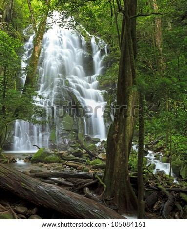 Seasonal waterfall and fallen tree seen through the forest at Rinc�³n de la Vieja National Park in Costa Rica